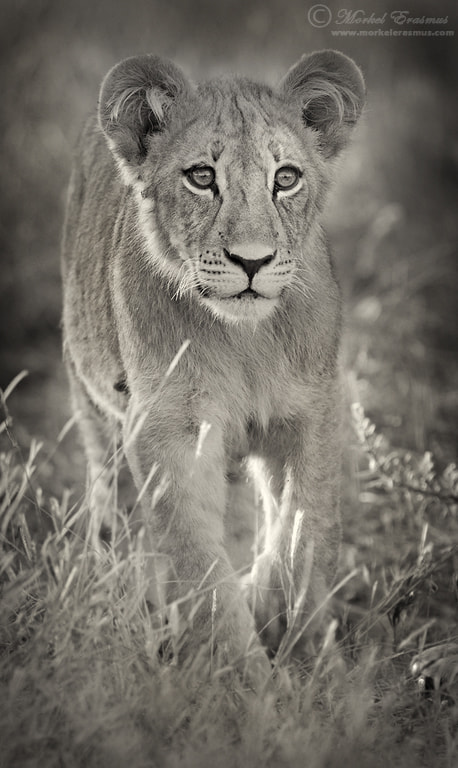 Photograph Curious Cub by Morkel Erasmus on 500px
