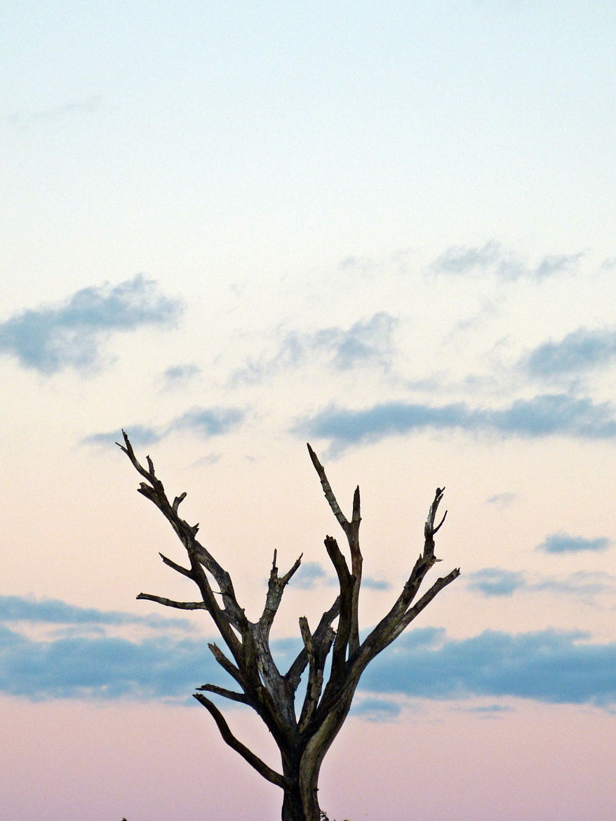 Photograph Old and forgetful tree by Fabiano Lima on 500px