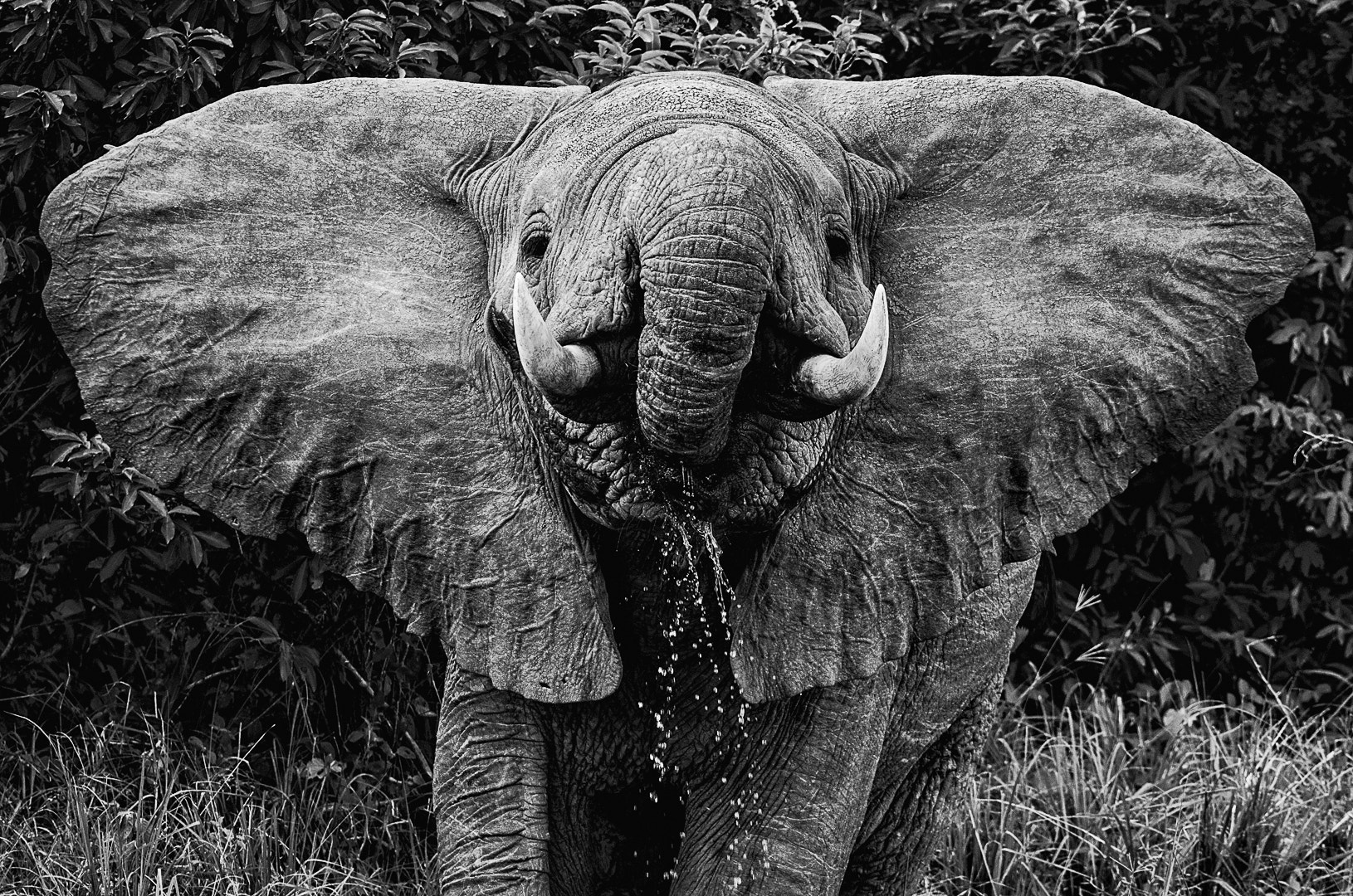 Photograph Elephant Close by Teus Renes on 500px