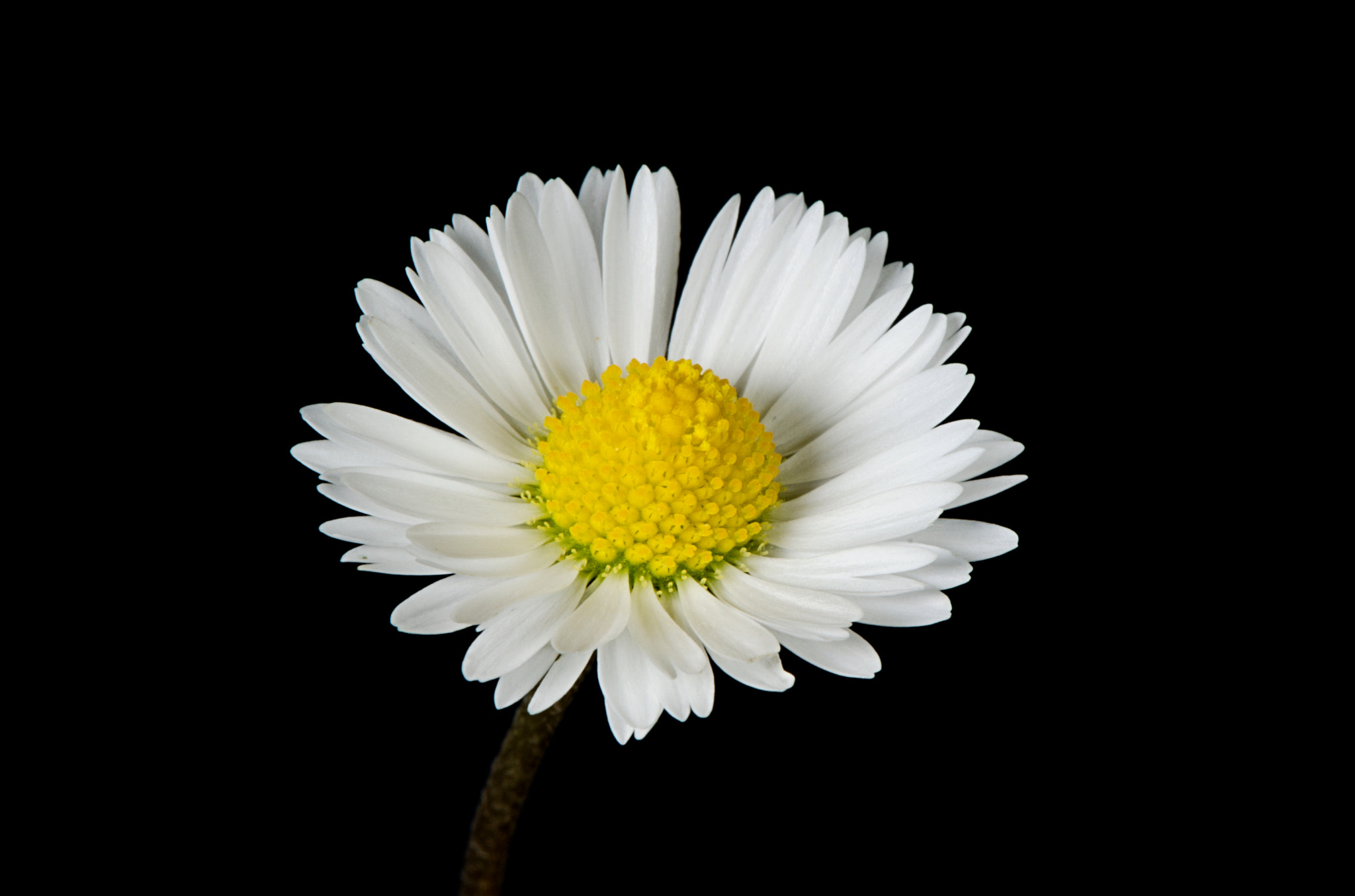 Photograph Little white flower 2 by Wayne Tan on 500px