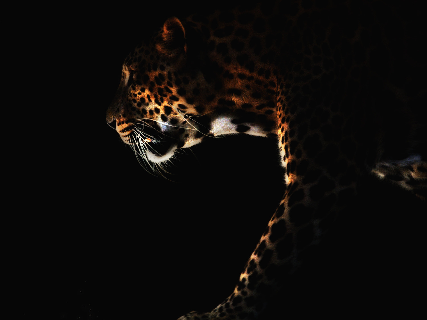 Photograph Through the dark by Henry Sudarman on 500px