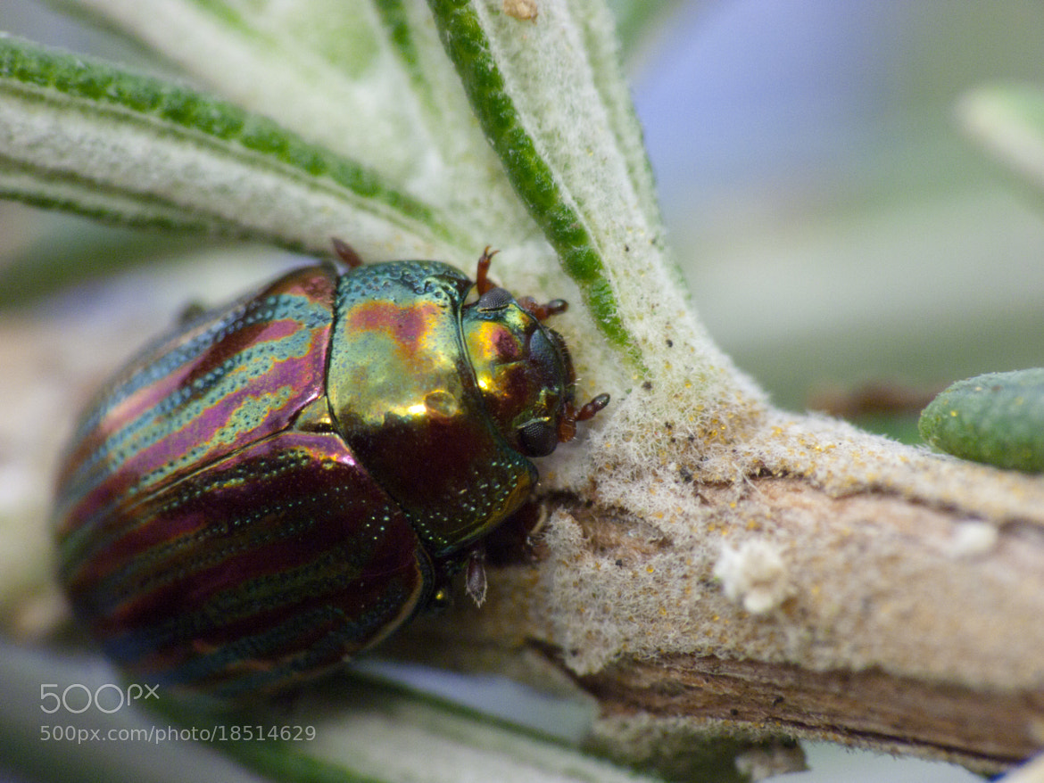 Photograph Life in colors by Eversoor on 500px