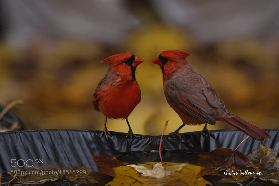 Photograph Red meeting by Andre Villeneuve on 500px