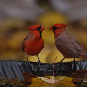 Red meeting by Andre Villeneuve (Andre_Villeneuve)) on 500px.com