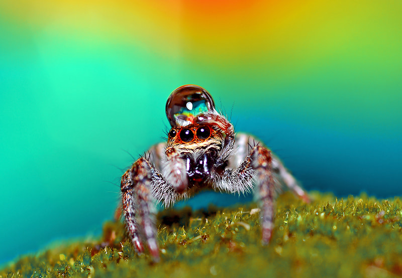 Photograph Spider on Moss..(oO^Oo)... by Bu Balus on 500px