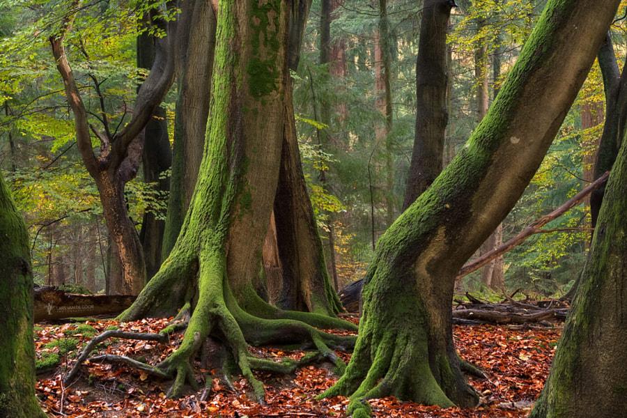Shaking Roots by Lars van de Goor on 500px.com