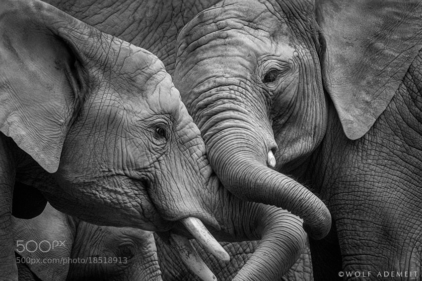 Photograph SQUEEZE ME by Wolf Ademeit on 500px