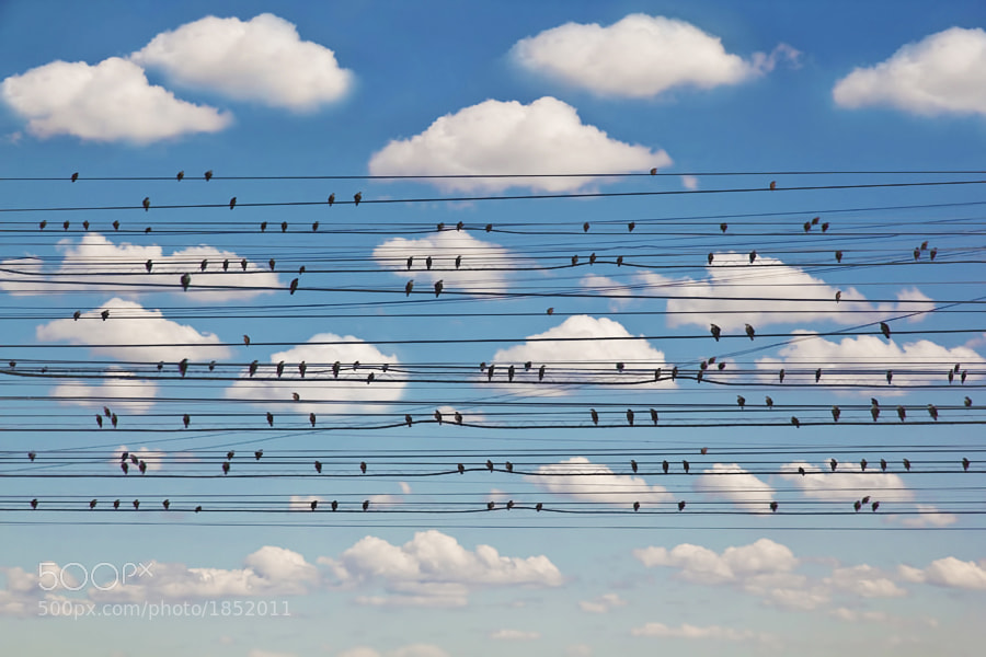 Photograph Concerto for Birds by Jared Lim on 500px