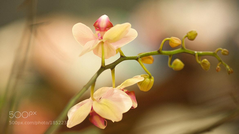 Photograph Цветок by Александр Церкасевич on 500px