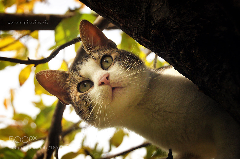 Photograph Little Predator by Zoran Milutinovic on 500px