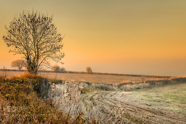 Photograph Frosty field near Witcombe by Chris Spracklen on 500px