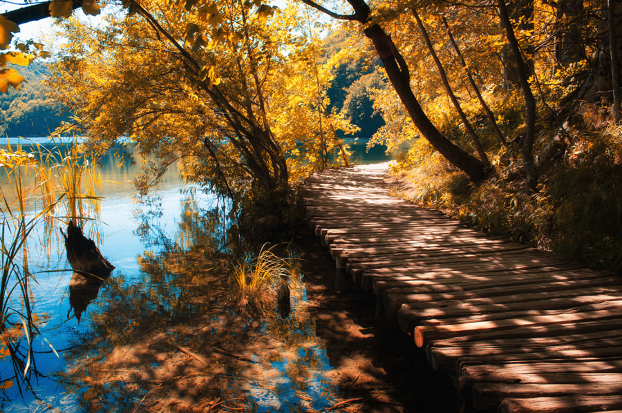 Photograph Road to the lake by Laszlo Gal on 500px