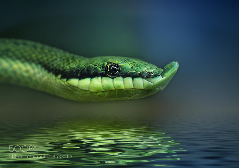 Photograph snake II by Detlef Knapp on 500px