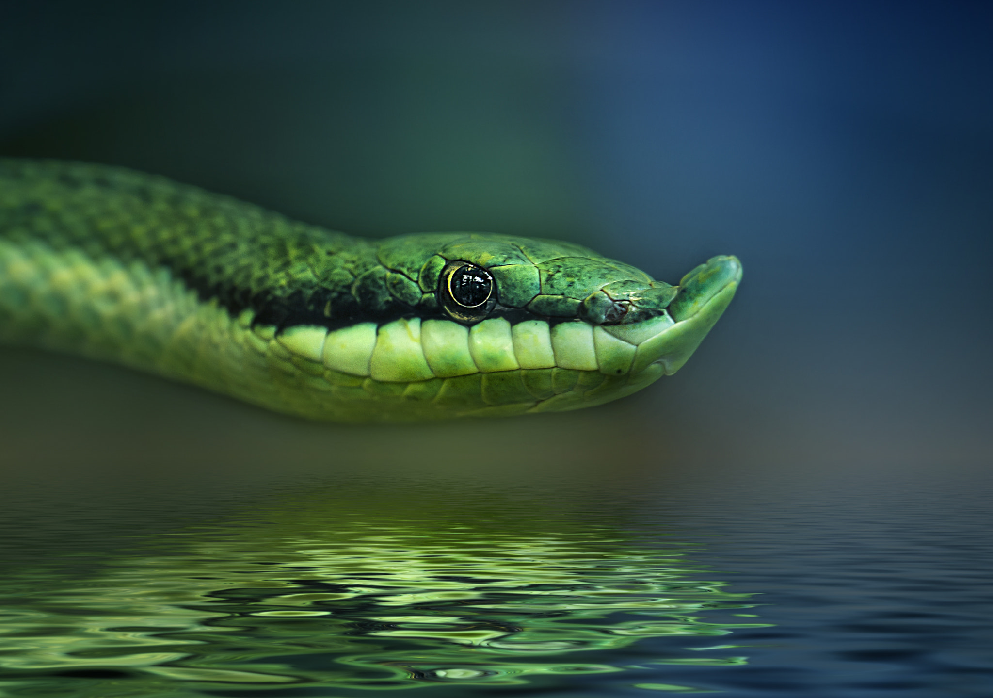 Photograph snake II by Detlef Knapp on 500px