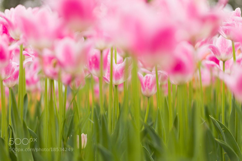 Photograph Pink & Green by Yoshitada Kurozumi on 500px