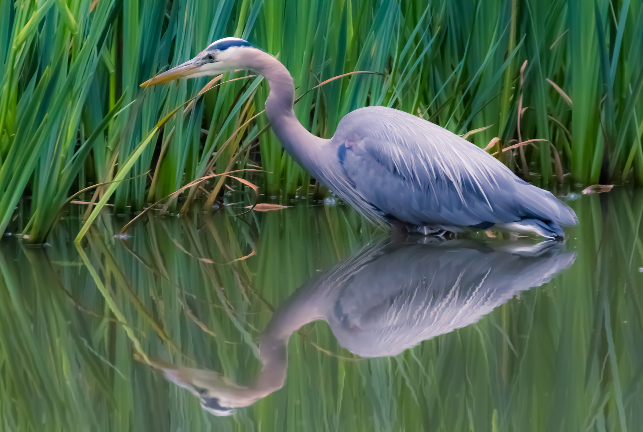 Photograph Heron  by Nigel Bullers on 500px