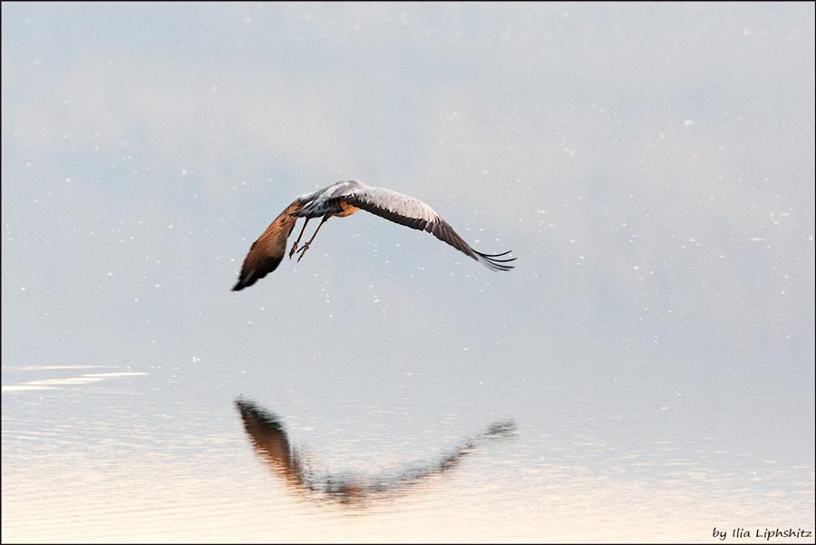 Morning cranes №33