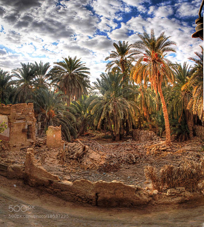 Photograph deserted Oasis by Ali El Hedek on 500px