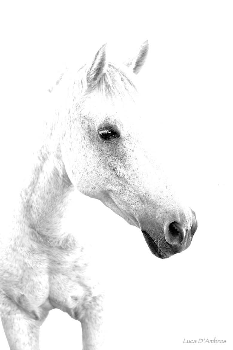 Photograph White horse by Luca D'Ambros on 500px