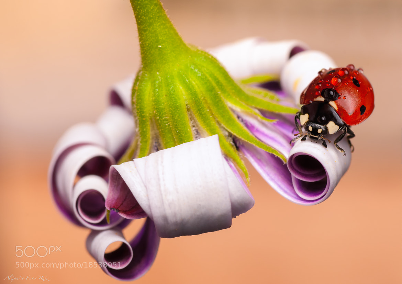 Photograph En flor 2 by Alejandro  Ferrer Ruiz  on 500px