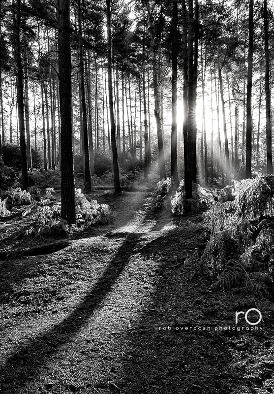 Photograph Of light and shadows by Rob Overcash on 500px