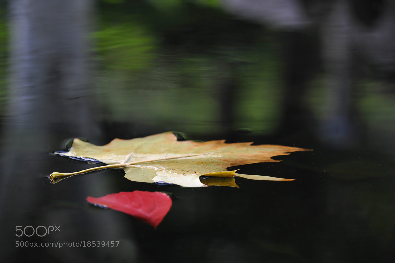 Photograph foglie sull'acqua by Carmelo Parisi on 500px