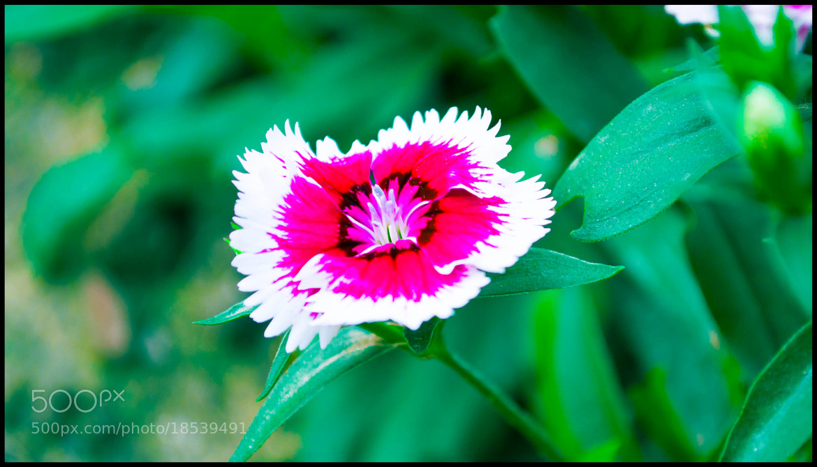 Photograph Fiore by Arijit Bose on 500px