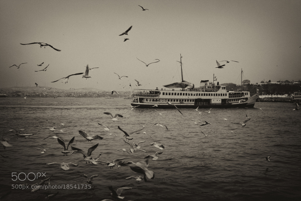 Photograph Seagulls and the ship by Onur Pinar on 500px