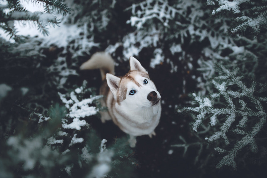 http://instagram.com/zachallia by Zach Allia on 500px.com