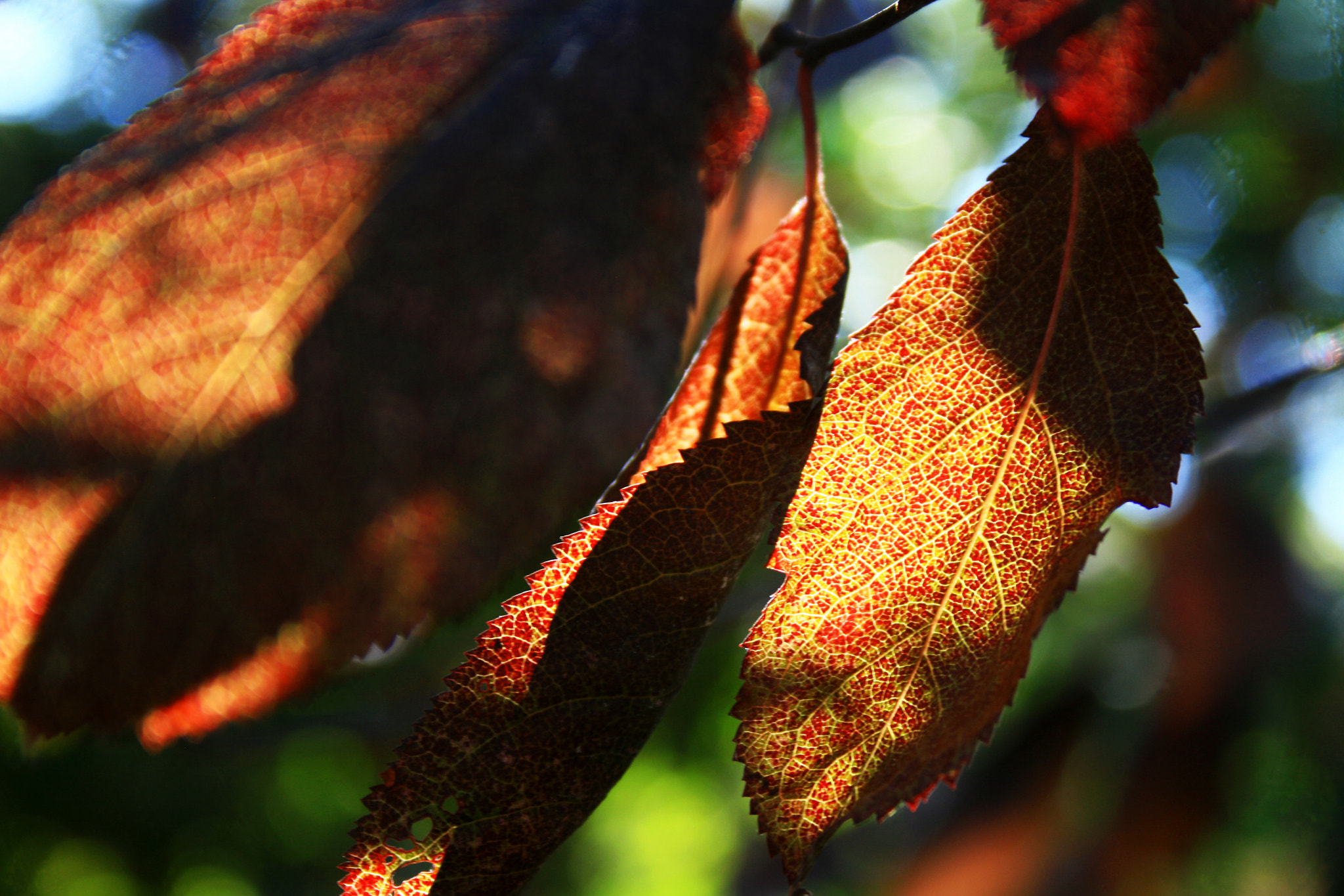 Photograph Spanish leaves by Kristin Segbefia on 500px
