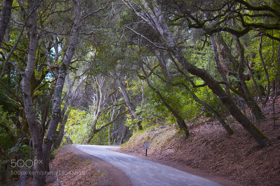 Photograph Sawyer Camp Trail by Renata  Velloso on 500px