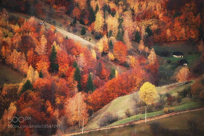 Photograph Y by belu gheorghe on 500px