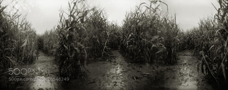 Photograph In a Corn Maze, Sauvie Island by Austin Granger on 500px