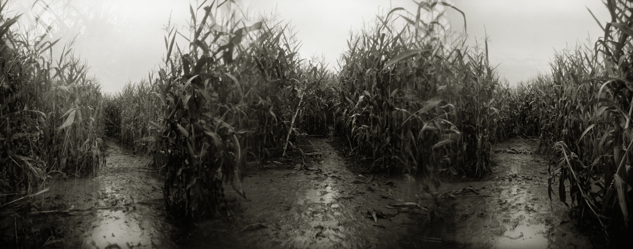 Photograph In a Corn Maze, Sauvie Island by Austin Granger on 500px