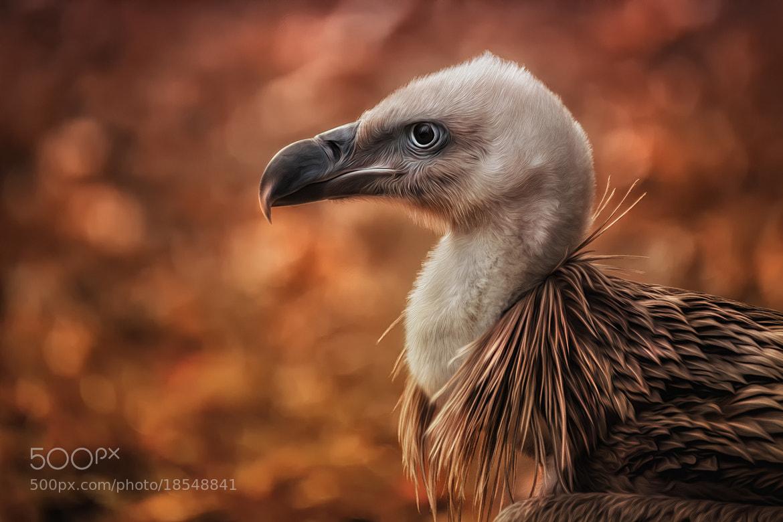 Photograph orange by Detlef Knapp on 500px