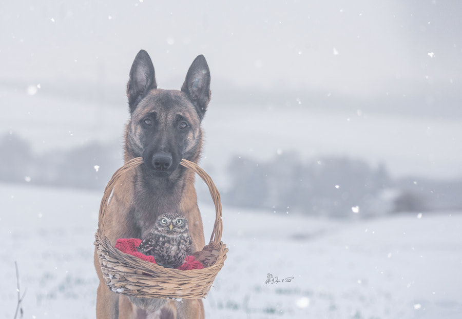 Coldness by Tanja Brandt on 500px.com