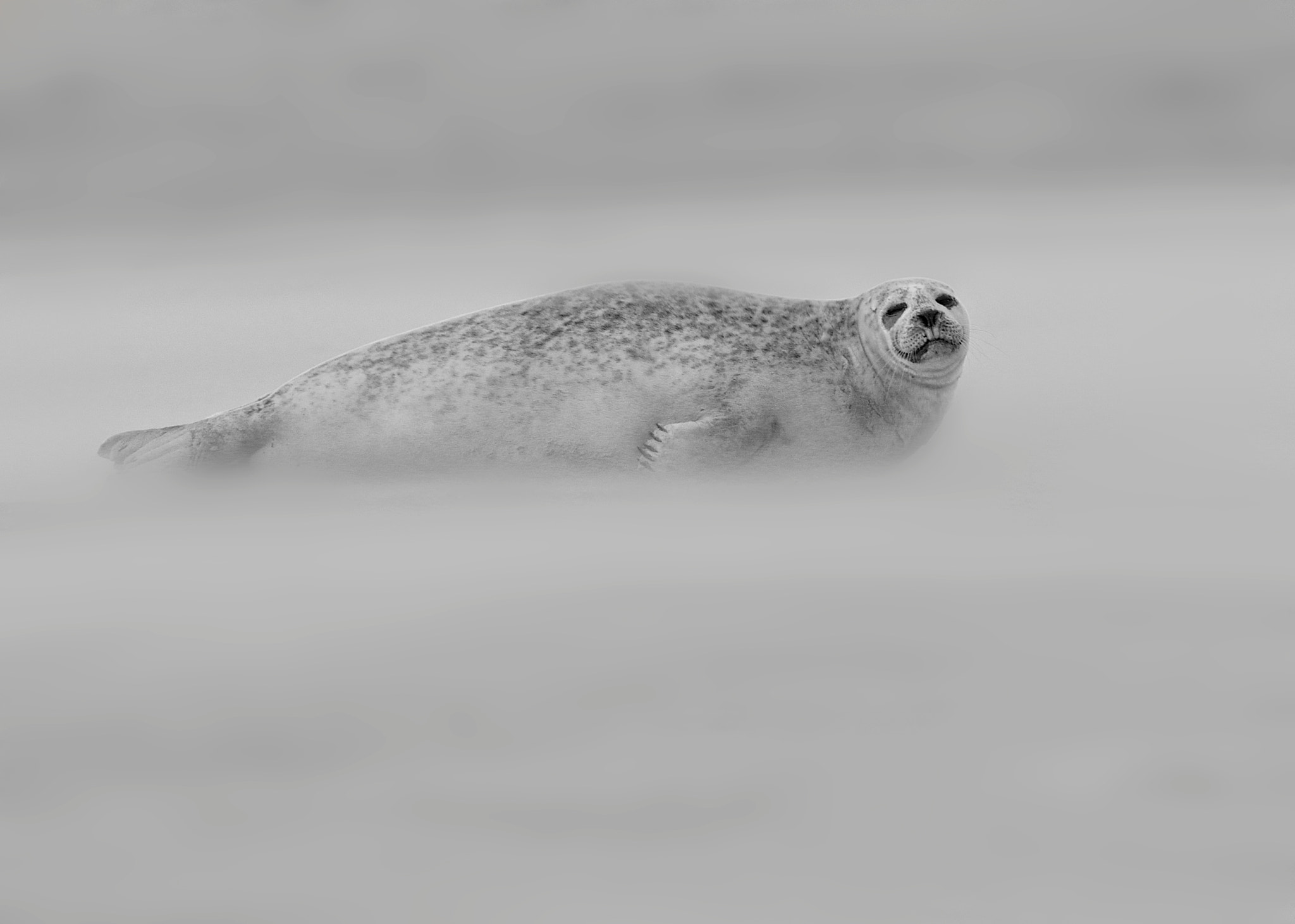 Photograph Seal in Sandstorm (B&W) by Alex Berryman on 500px