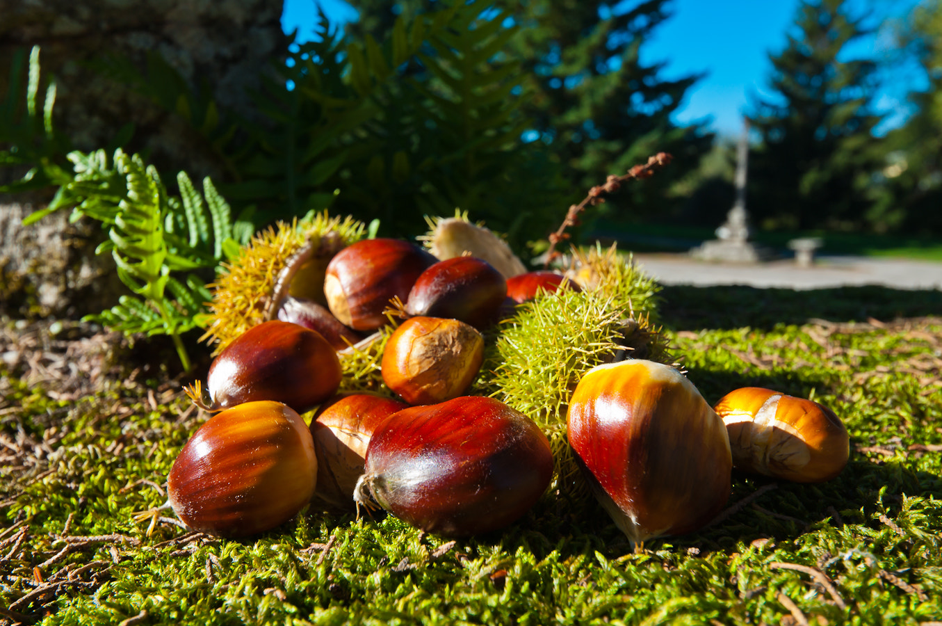 Photograph Autumn fruit by Jose Angel Niño Martinez on 500px