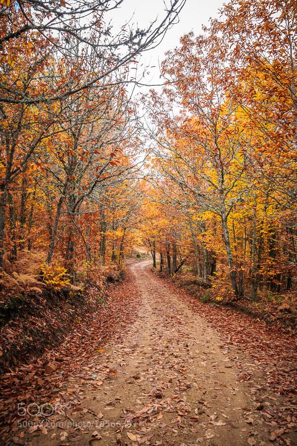 Photograph Otoño en el camino by Jose Agudo on 500px
