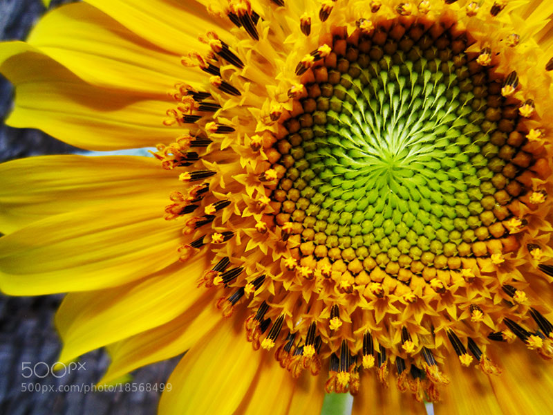 Photograph Sun... by Parissa Allahyari on 500px