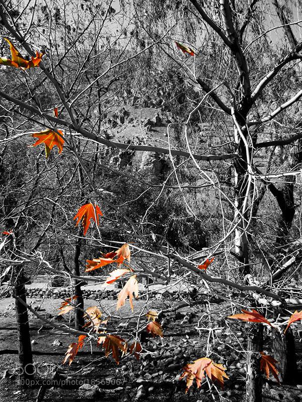 Photograph Fall by Parissa Allahyari on 500px