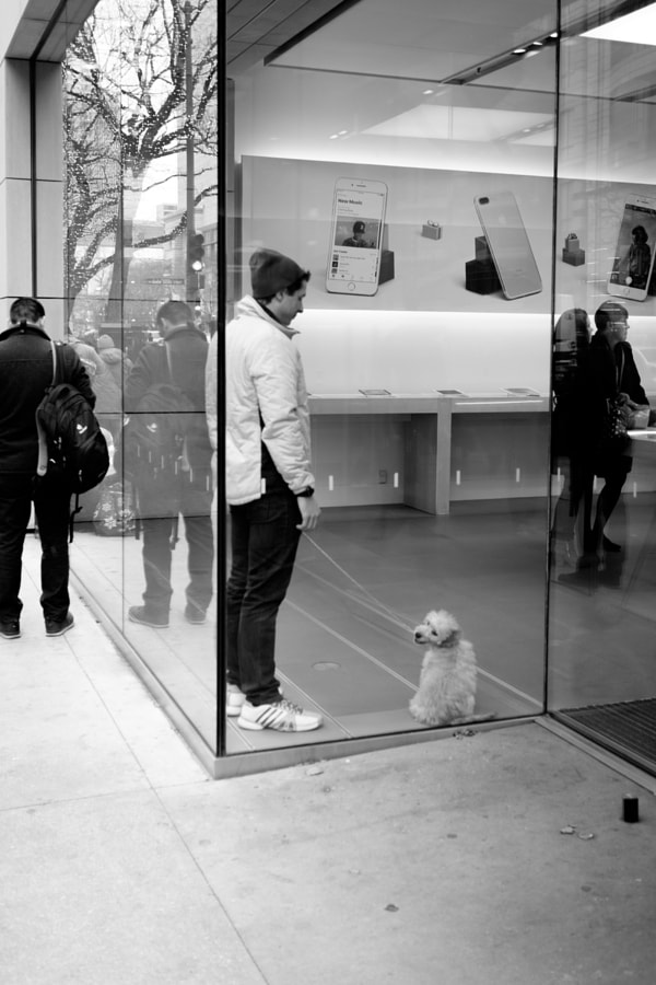 Even puppies are happy when they get to go to the Apple Store!