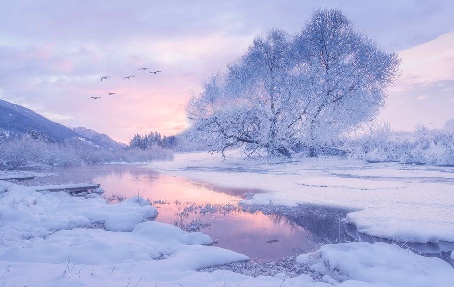 Magical Winter Dream by Margaret Morgan on 500px.com