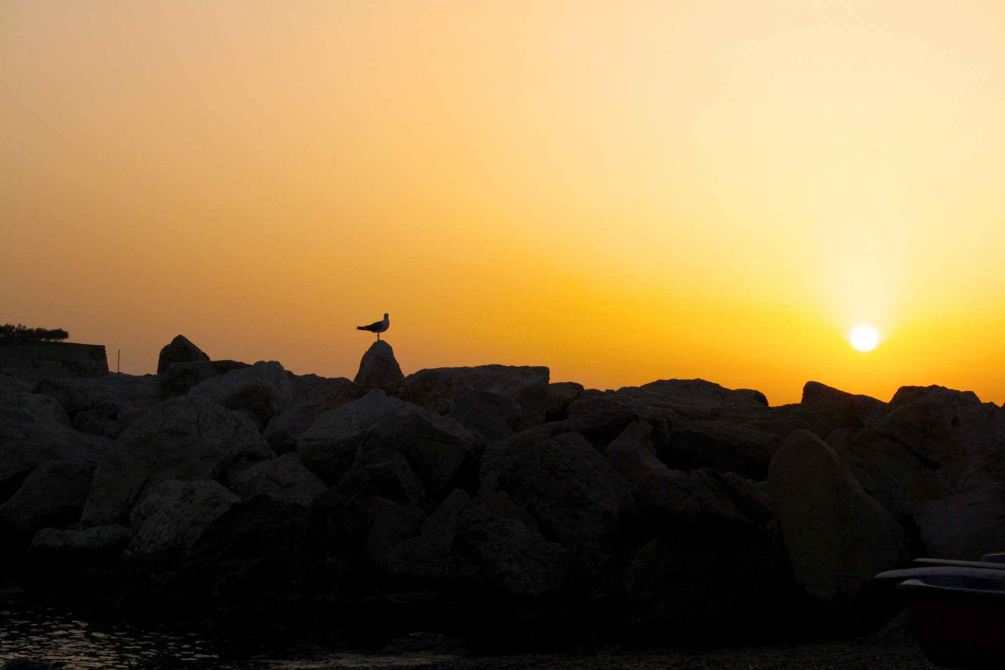 Photograph sunset and seagull by antonio biancardi on 500px
