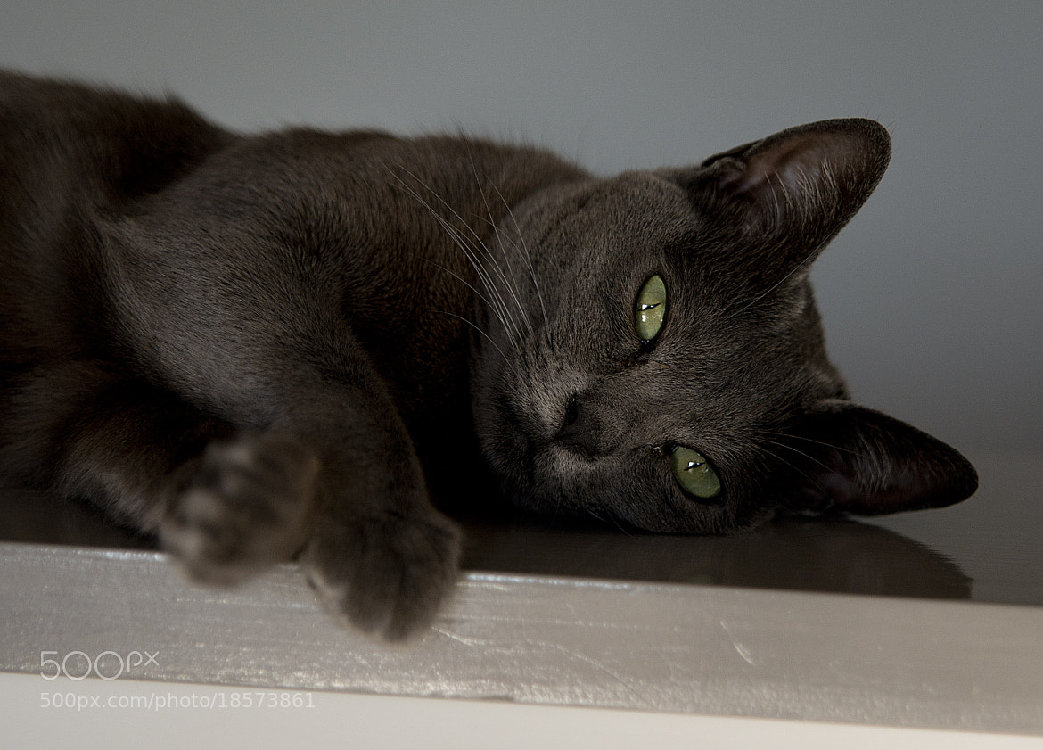 Photograph feline by Simon Norris on 500px