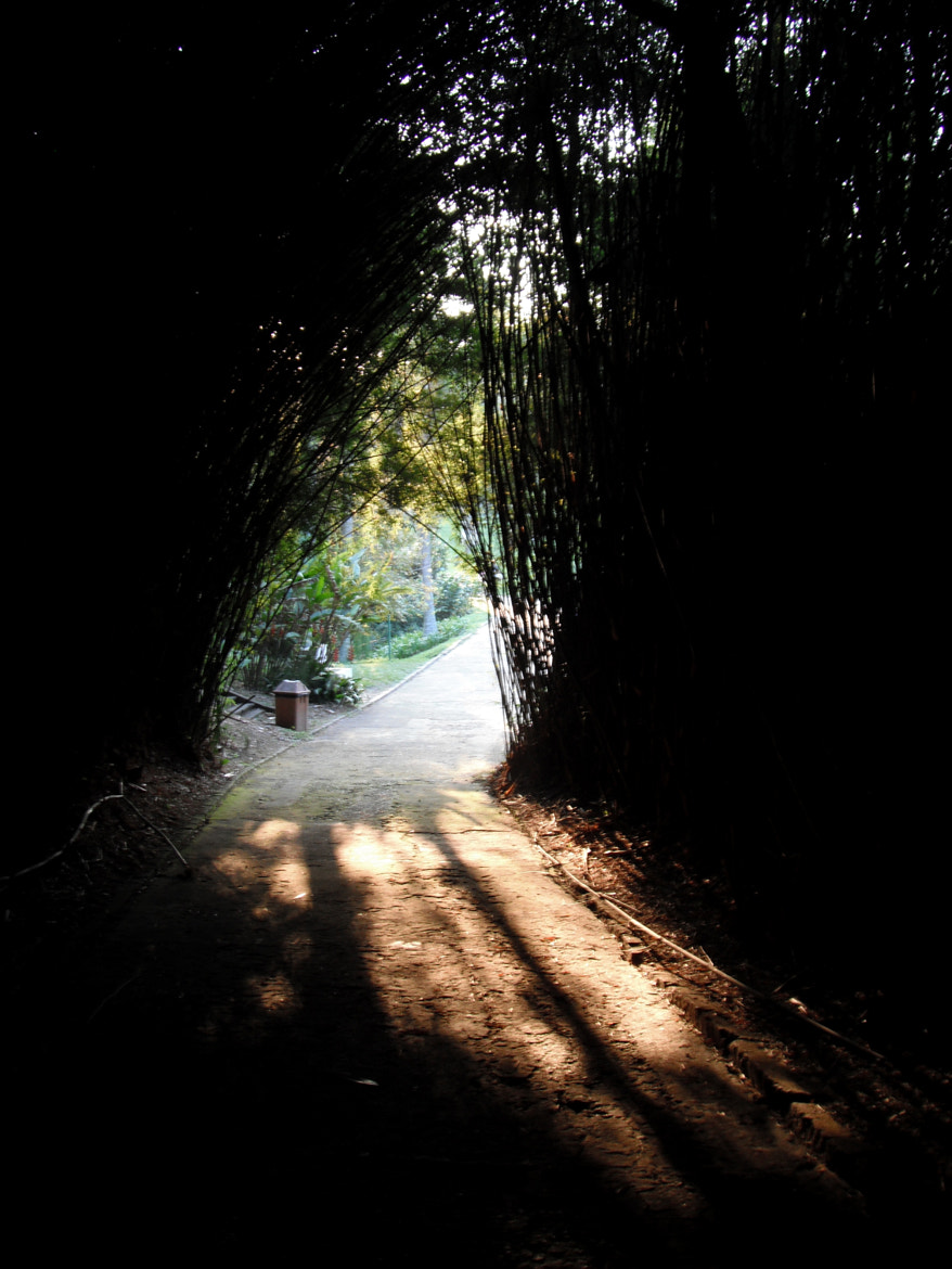 Photograph Bamboo tunnel by Thais Grazziano on 500px