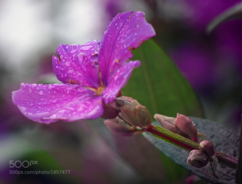 Photograph After the rain by Dmitry Yemelin on 500px