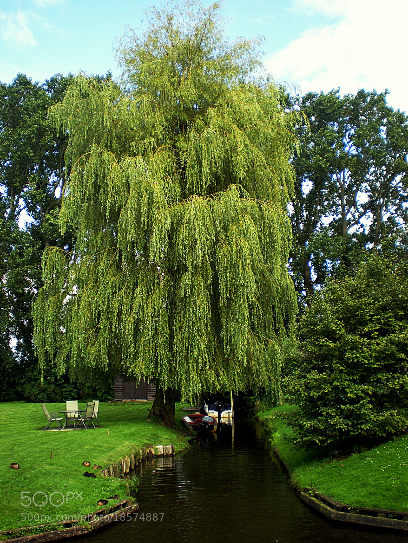 Photograph Giethoorn trees. Holland. by Ángel  Ramírez Gómez on 500px