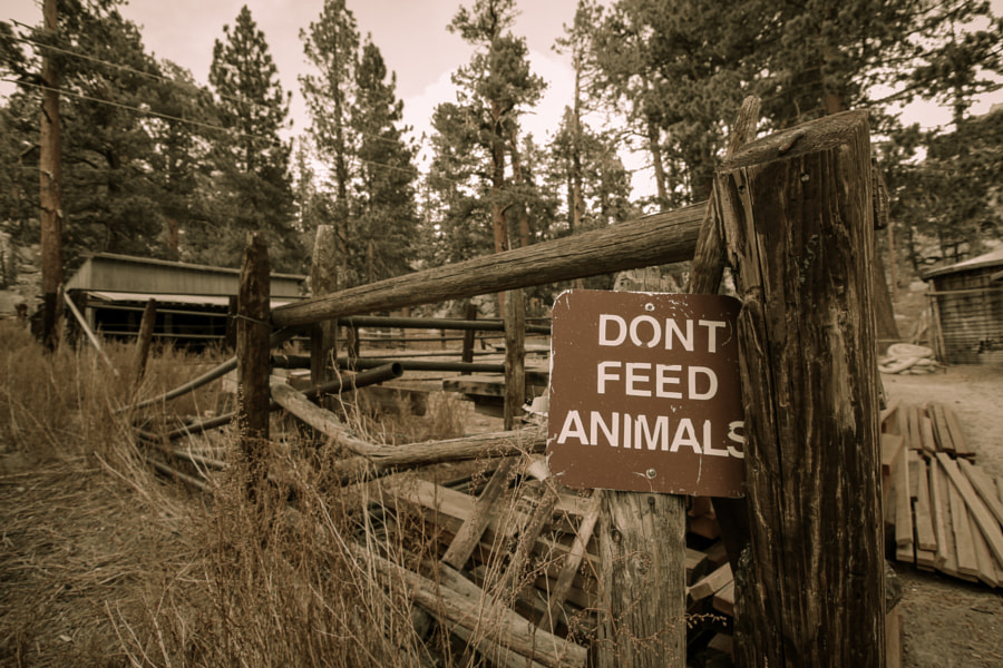 Don't Feed Animals