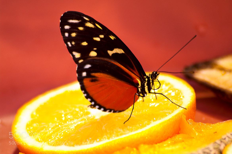 Photograph Hummm! Orange by Ronald Diaz on 500px